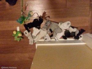 할머니 죽음 받아들이지 못해 매일 장난감 갖다 놓는 고양이