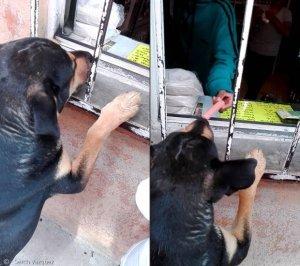"""""""돈으로 주세요"""" 간식 대신 돈 구걸하는 강아지"""