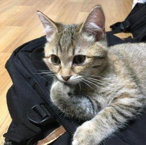 늦게 귀가한 집사에 '사랑의 매' 드는 고양이