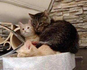2년간 불치병 이겨낸 노령고양이… 비결은 아기냥?