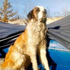 영하 10도 호수에 얼어 붙어 죽어가던 개