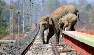 화염병에 겁에 질려 도망가는 코끼리 모자(母子)
