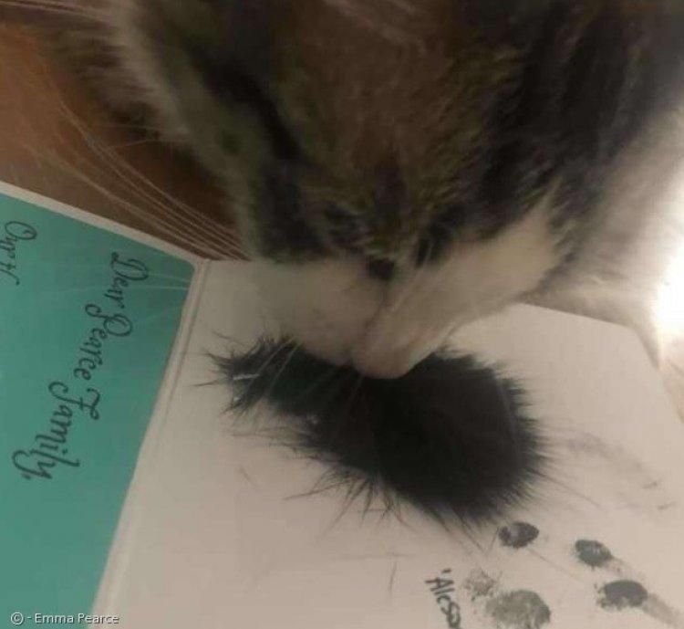 무지개다리 건넌 친구의 털을 본 고양이 반응은?