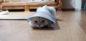 고양이 vs 집사의 물러설 수 없는 '자존심' 한판 승부, 결과는?
