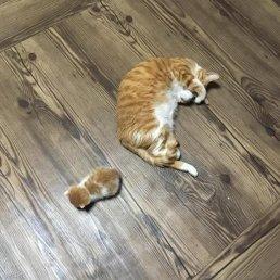 """""""이랬던 고양이를…"""" 과체중 부른 고양이 '확대'범"""