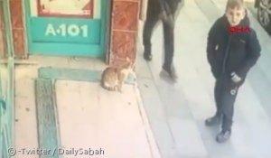 여자·아이 빼고 '남자·개'만 공격한 길고양이… 왜?