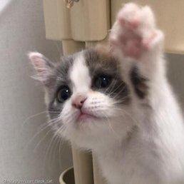 '이보다 귀여울 수 있냥?' 젤리 자랑하는 뽀시래기 고양이