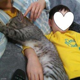 윤기 나는 털의 비밀… 혼자서 빗질하는 고양이
