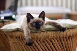 좀처럼 교육하기 어려운 고양이 배변훈련 이렇게 한번 해보세요!