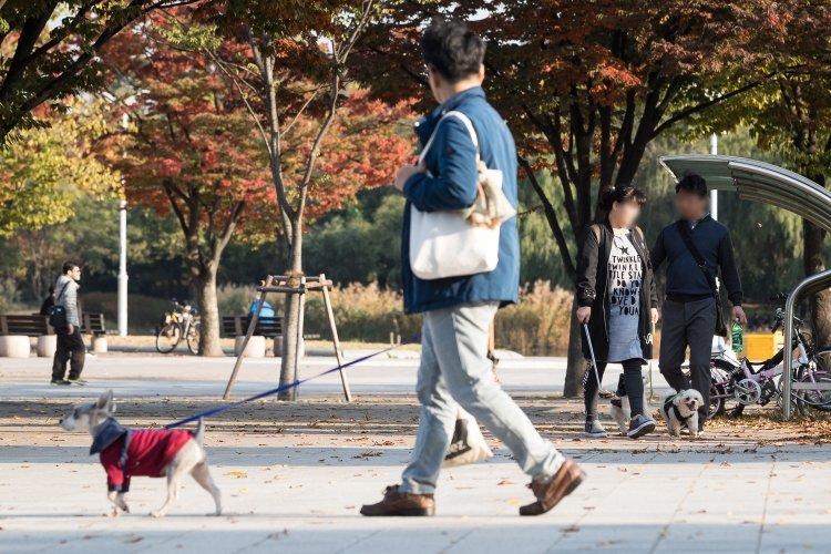 산책 줄고 목줄 바짝, '개물림 사망' 이후 공원에서는…