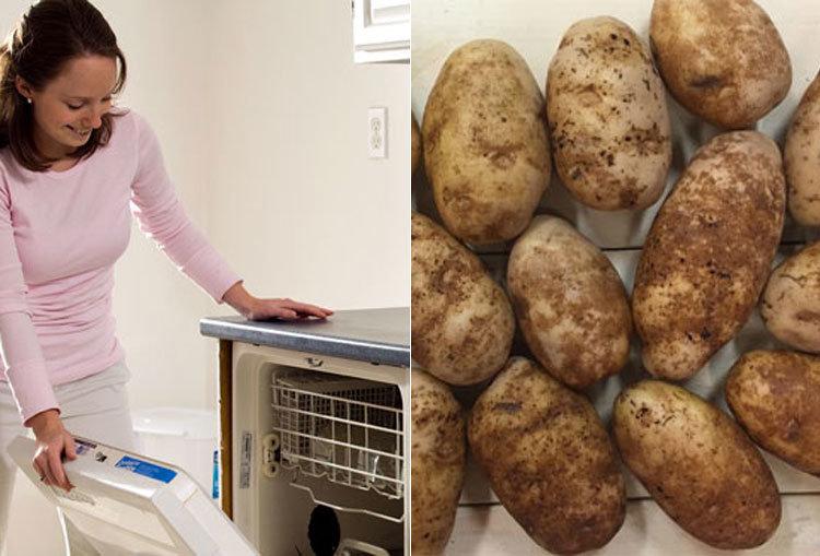 흙 묻은 감자 '스무 개' 한꺼번에 씻는 초간편 비법… 설마 식기세척기에?