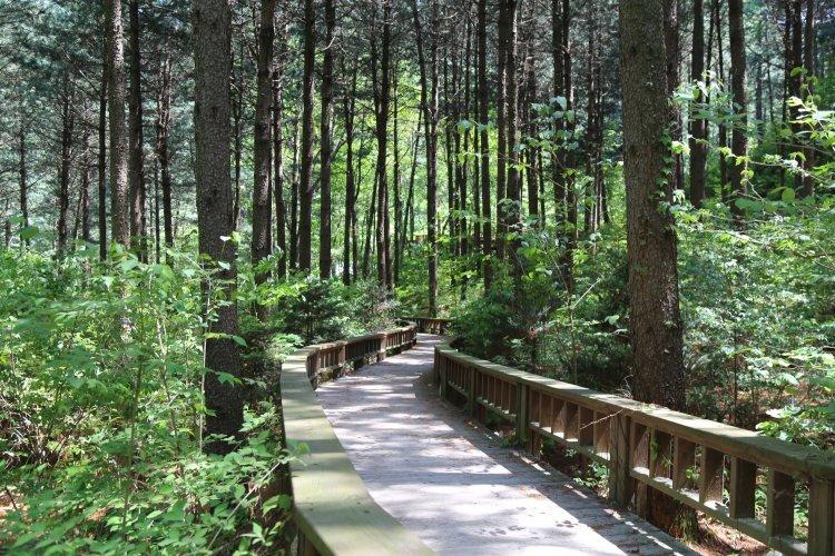 """""""숲은 위로와 치유를 준다""""…휴양림 숲길 걸어 볼까"""