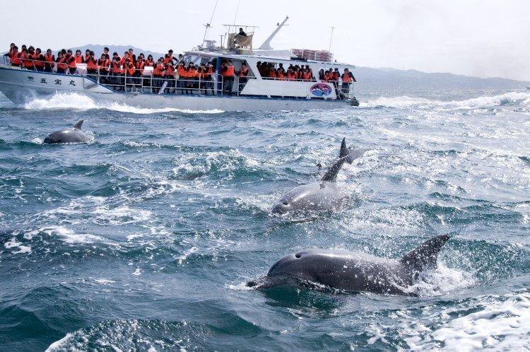 돌고래도 보고 진주도 캐고… 이런 규슈 여행 어때?