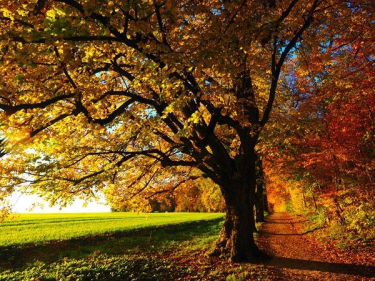 깊어가는 가을, 전국 단풍 명소서 가을의 낭만을 만끽하세요
