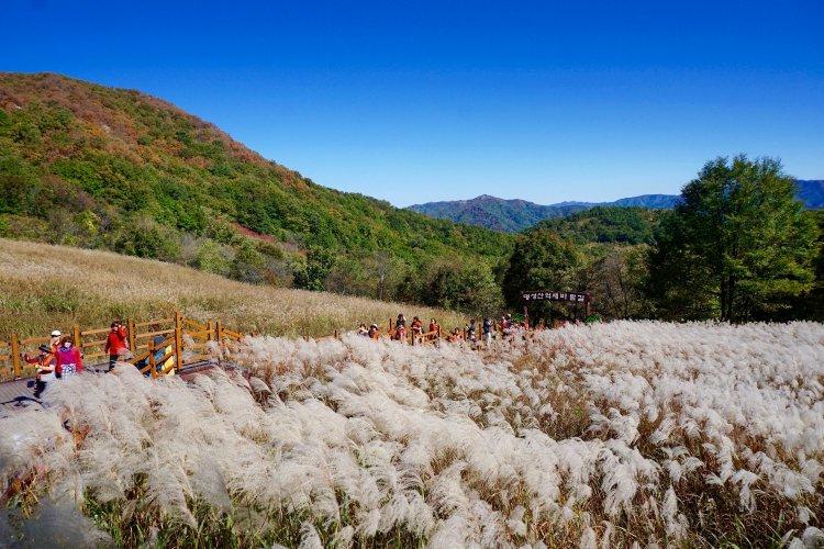 가는 가을 아쉬워…한국관광공사 추천 11월 가볼 만한 곳