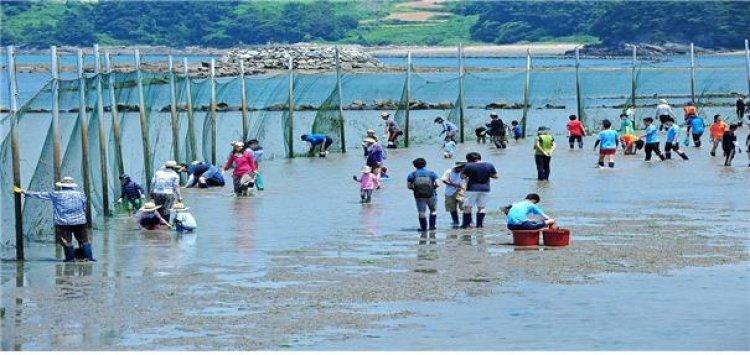 봄 여행주간은 '오감만족 어촌에서'…해수부, 어촌체험마을 20선 추천