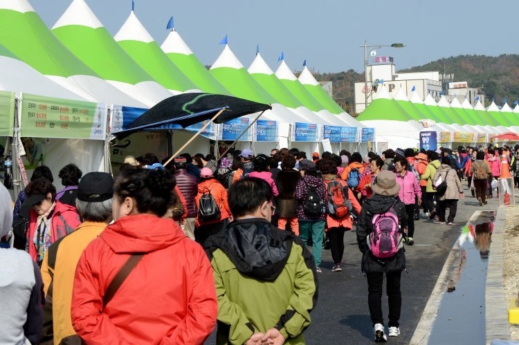 '통일명태와 떠나는 여행'…고성 명태축제 18일 개막