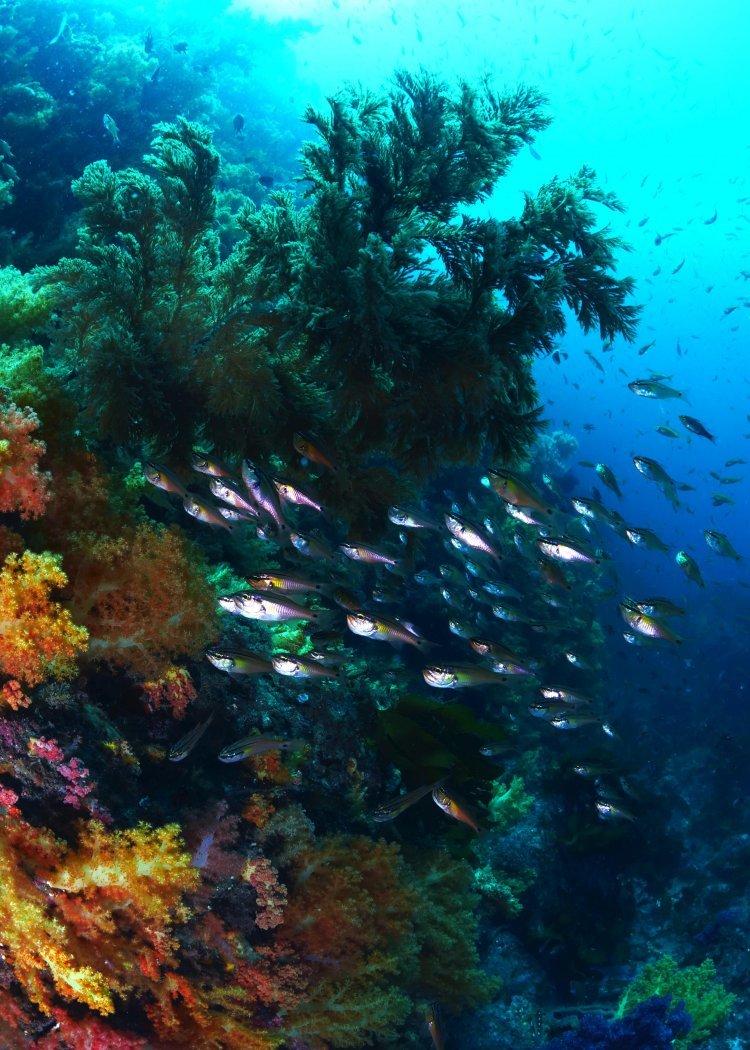 수중경관 아름다운 곳은? 해수부, 바닷속 생태 비경 10선 선정