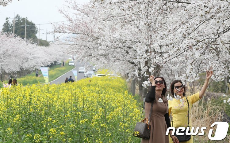 제주에서 봄 만끽하려면? 제주관광공사 관광 10선 발표