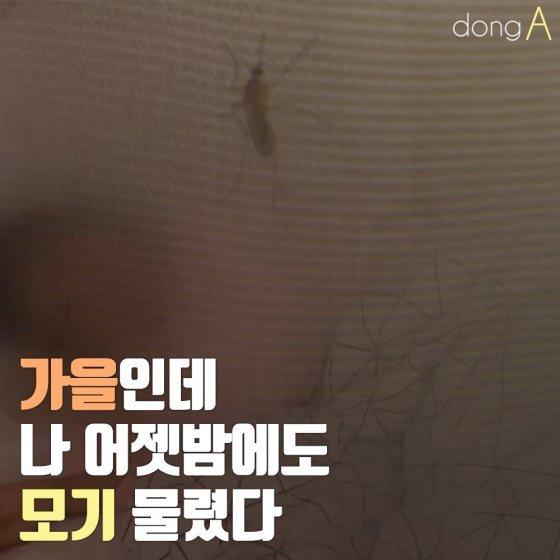 [카드뉴스]가을인데, 나 어젯밤에도 모기 물렸다