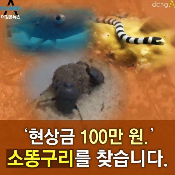[카드뉴스]'현상금 100만원'…그 많던 소똥구리는 어디로 사라졌을까