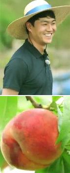 '착한 농부'가 우렁이로 재배한 복숭아, 그 맛은?