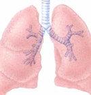 살아있는 사람의 폐이식 허용된다