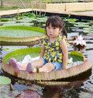 물 위에 앉다