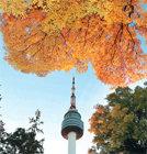 파란 하늘 물들인남산의 가을