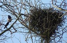 나뭇가지 얼기설기 엮은 둥지가우디도 놀랄 까치집의 과학