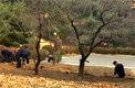 北, 귀순병사 넘어온 군사분계선인근에 도랑 파고 나무 심은 까닭
