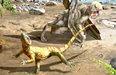 1억1000만년 전 도마뱀두 발로 '한반도' 뛰어다녔다