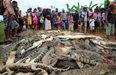 인도네시아서 마을 주민들이악어 300마리 대학살 이유는?