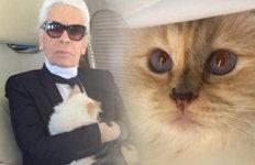 라거펠트의 고양이 '슈페트' 2247억 유산 받을까