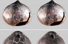대가야 건국신화 그림 새겨진'토제방울' 발굴…고령 고분군 석곽묘서
