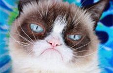 하늘나라로 간 '뚱한 고양이''그럼피 캣' 숨지자 누리꾼 추모
