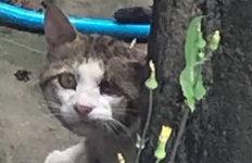 군산서 머리에 못 박힌고양이 발견…대체 누가?
