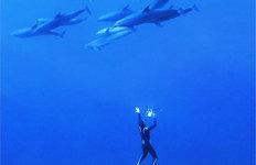 깊은 바다를 맨몸으로…'숨막히는 자유' 찾는 사람들