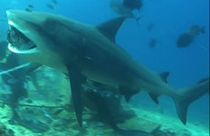 8살 호주 소년, 자기 몸무게의4배나 되는 상어잡다