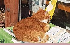 자신의 초상화 바라보며…일광욕 즐기는 고양이
