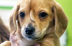 """눈 사이 꼬리 달린 강아지너도나도 """"입양하겠다"""""""