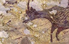 4만3900년 전 '물소 사냥'인류 最古 동굴벽화 발견
