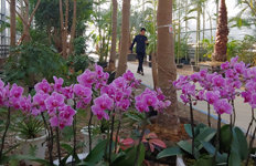 죽어가는 꽃도 살려낸다…아세요? 인천공항 식물병원