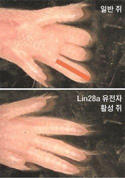 불가사의 - Magazine cover