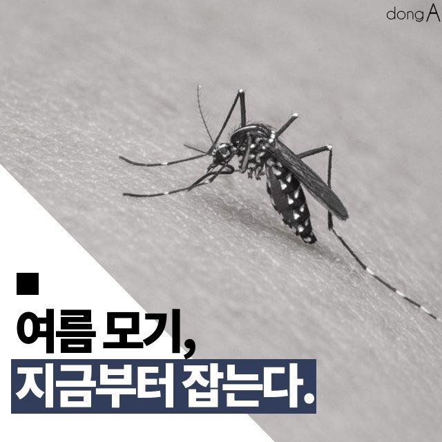 [카드뉴스]여름 모기, 겨울부터 잡는다