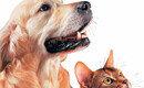 개와 고양이를 이해하는가장 완벽한 방법