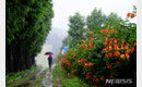 [날씨]비 내리는 토요일…습도 올라 무더위는 계속
