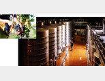 뉴질랜드 소비뇽 블랑 품종은 허브향이 특징이다. 사진은 뉴질랜드에서 포도를 수확하는 모습(왼쪽). 뉴질랜드 와이너리 내부. [사진 제공 ·뉴질랜드 무역진흥청]