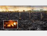 화재로 잿더미로 변한 아마존 열대우림(큰 사진)과 브라질군 병사들이 화재 진압을 하는 모습. [G1, Folhapress]