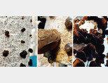 목이버섯이 자라는 풍경. [사진 제공 · 새암농장]